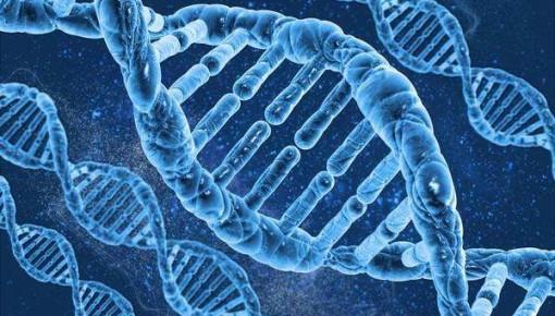 英研究称通过分析DNA信息可预测寿命