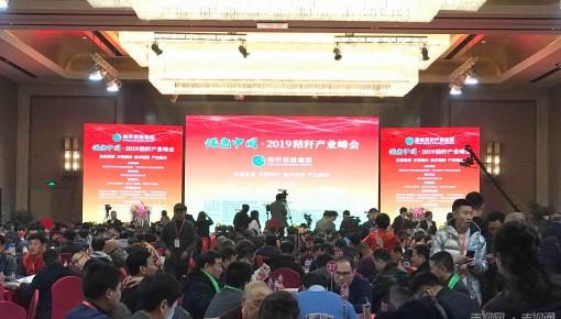 """绿色中国·2019秸秆产业峰会吹响秸秆产业""""集秸号"""""""