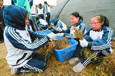 报告显示:中国小学生日均劳动时间只有12分钟