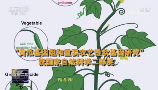 破解黄瓜基因密码!农业领域多项成果获国家科学技术奖励