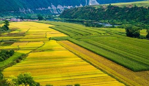 2019年我省现代农业产业体系建设重点抓好七项任务