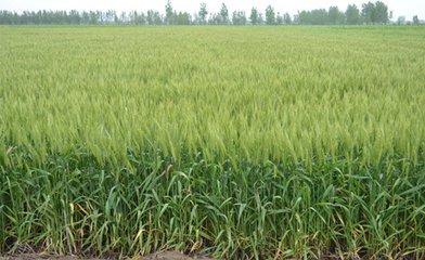 春耕由南向北渐次展开 今年粮食产量将确保稳定在2018年水平