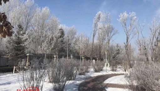 长春出现美丽树挂:玉树琼枝,宛若仙境!