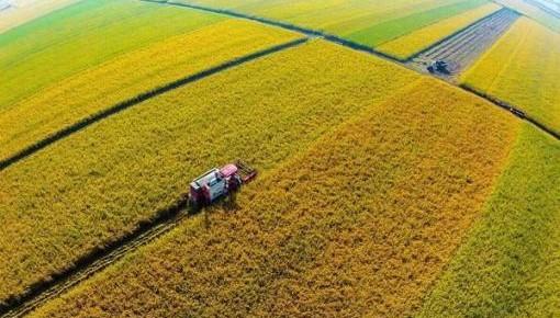 2019年吉林省农作物主要病虫害发生趋势预报