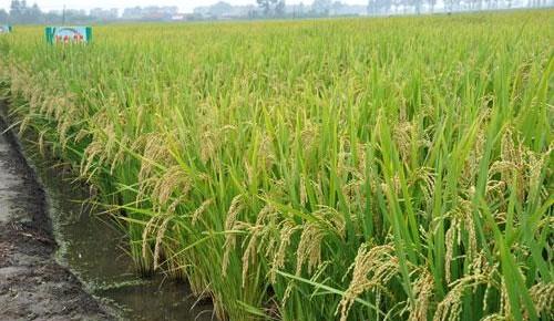 吉林省1月原粮价格小幅下降,成品粮零售价格基本稳定