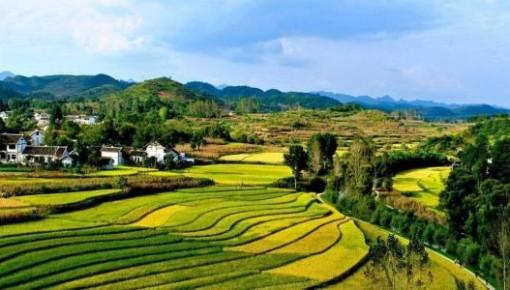 农民增收不能停步(政策解读·聚焦中央一号文件③)