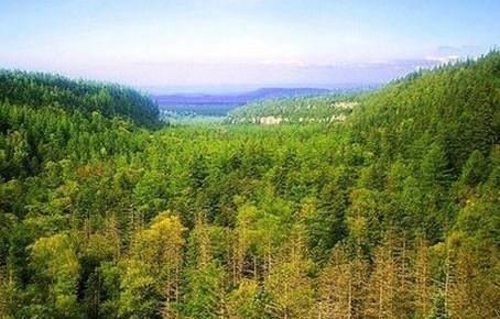 吉林省政府发布森林防火命令 森林防火区内禁止一切野外用火