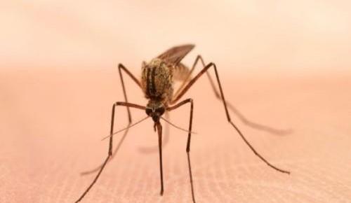 """疟疾疗法的""""前世今生"""" 曾被世卫组织谴责"""