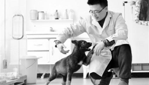 中国首只克隆警犬诞生 已开始接受上岗培训