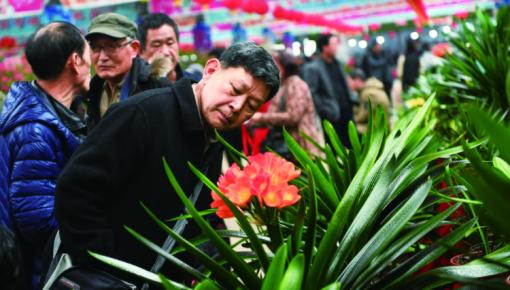 第十五届中国·长春君子兰节开幕 电商manbetx官方网站手机客户端成亮点