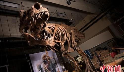 专家确认史上最大暴龙:重8800公斤 花数十年重建骨骼