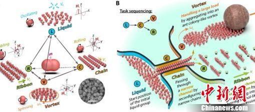 中国学者研制出可用于癌症诊断治疗的磁性微游动机器人