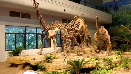 吉林省第一家恐龙博物馆——延吉恐龙博物馆7月份将开放部分场馆