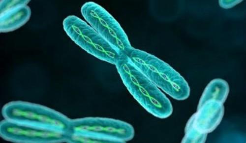 为何女性活得比较长?X染色体有备份,患病风险低