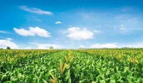 《吉林省农民专业合作社条例》发布 2019年7月1日起施行