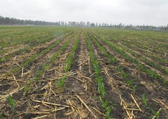 我省进入玉米适宜播种期 建议适时开展播种