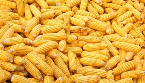 2019年吉林省继续实行玉米和大豆种植者补贴政策,提高大豆补贴标准