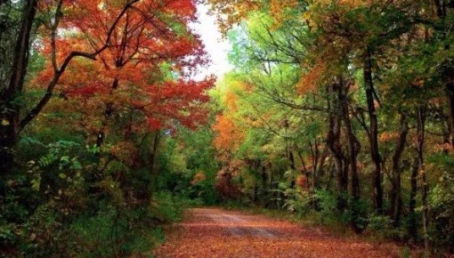森林体验国家重点建设基地名单公布!吉林省四家基地上榜