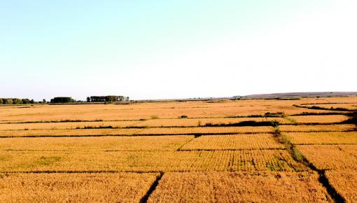 """""""天下第一粮仓""""榆树市打造现代农业新样板"""