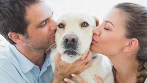 小心!拥抱亲吻宠物可能滋长并传播耐药性超级病毒