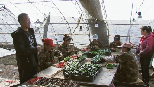 """新型农业经营主体带头人刘英奎:""""吊""""起来的""""种瓜传奇"""""""