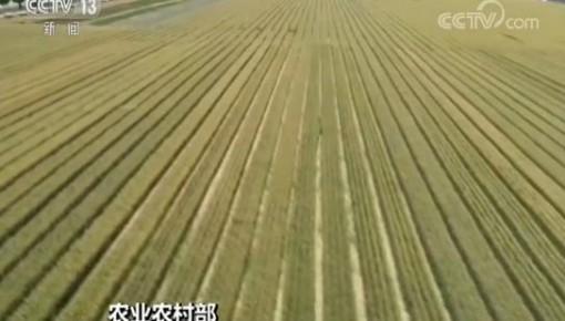 今年农业农村经济亮点频现 一季度第一产业增加值8769亿元