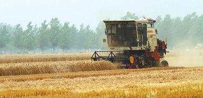 麦收正忙 全国机收冬小麦超亿亩