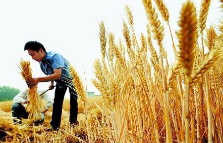 中央財政支持農業生產社會化服務取得明顯成效:糧食增產 農民增收