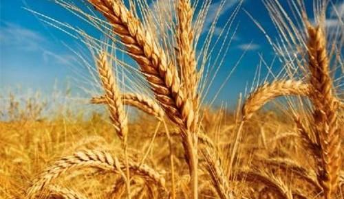 十張動圖回答了中國農業一個尖銳問題