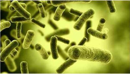 澳大利亞研究發現新型抗過敏細胞 可阻止過敏反應