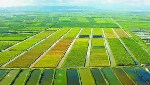 夏糧豐收已成定局 農村消費持續活躍