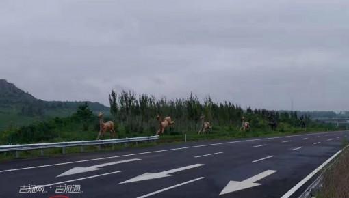 伊开高速二期通车 直连京哈大通道