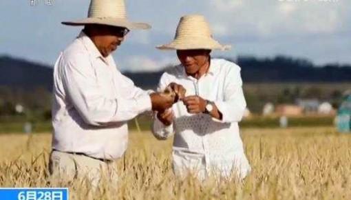 中国杂交水稻在非洲创高产纪录  未来有望解决非洲贫困国家的粮食安全问题