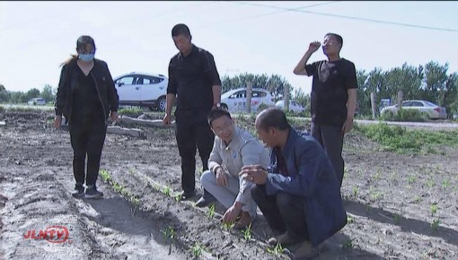 """新型农业技术带头人侯刚:致富路上的""""领头羊"""""""