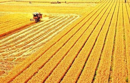丰收抢收、惠农利农、优质优价——2019年全国夏粮收购三大亮点