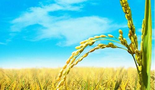 优先发展农业农村的现实路径