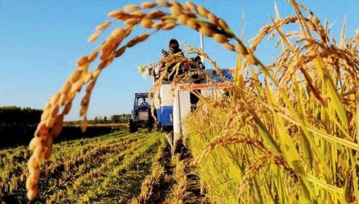 农业农村部:上半年农业农村经济发展稳中向好
