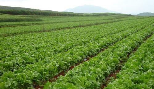 吉林省蔬菜种植业已发展成为第二大种植产业