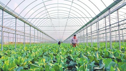 吉林省拟定10个省级特色农产品优势区!为家乡农产助力!