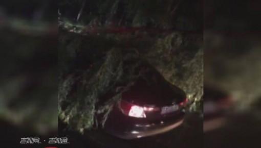 德惠:暴风雨吹断大树 砸向行驶车辆致一人被困