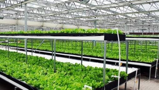 LED植物工厂:中国有了自己的最高级农业