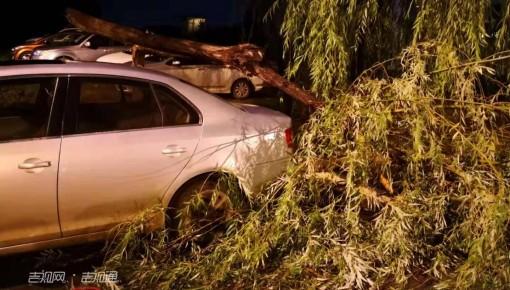 昨夜风急雨骤,长春多处树倒砸车,咋索赔看这里