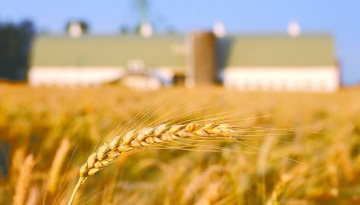 农业农村部:上半年农产品质量安全水平稳定向好