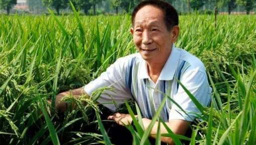 袁隆平院士担任舒兰市人民政府首席顾问