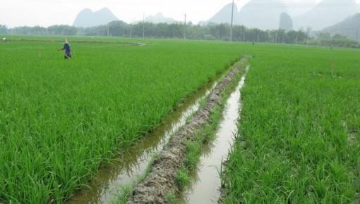 """农业农村部:""""两促一降""""指导灾后水稻生产"""