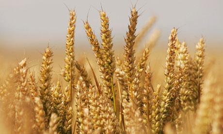 夏粮增产,端牢中国饭碗(评论员观察)