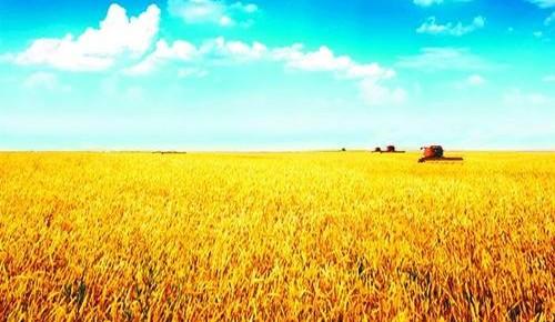 吉林省支农惠农兴农政策来了,54条!条条有亮点!