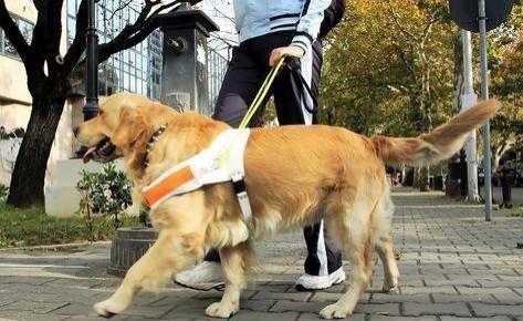 """养狗得有""""规矩"""" !长春市将重点整治遛犬不束犬链等行为"""