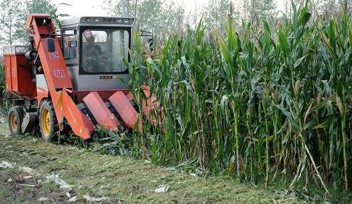 全国种植业推广机构达24394个,推广人员近55万——让新农艺新品种落地生根(读党报 看变迁)
