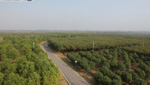 朝陽產業!全國苗木花卉年產值近4500億元